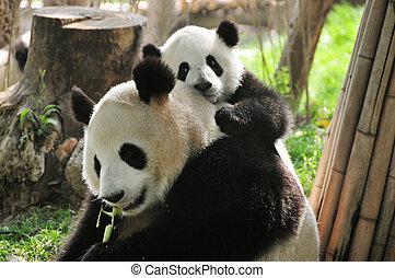 jättelik panda, och, baby