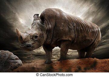 jättestor, noshörning, mot, stormig himmel
