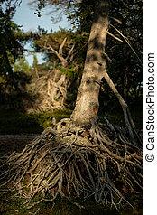 jättestor, träd, system, liten, rot, synhåll
