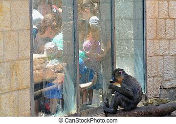 jérusalem, biblique, zoo