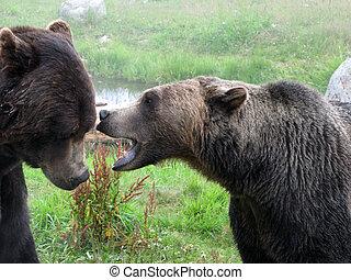jésus-christ, canada, grouse, habitat, grisonnant, -, ours,...