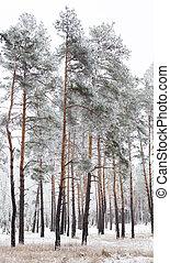 jíní, hynout ukrýt v lese, pokrytý