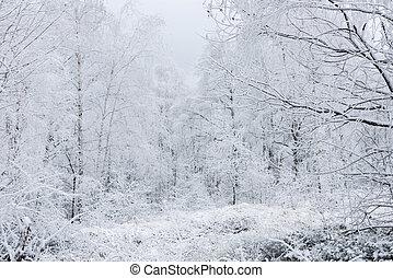 jíní, krajina, winter kopyto