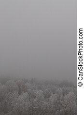 jíní, les, mlha, pokrytý, zamrzlý