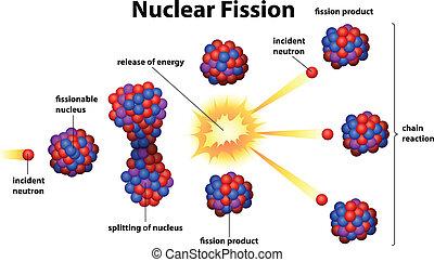jądrowy, podział