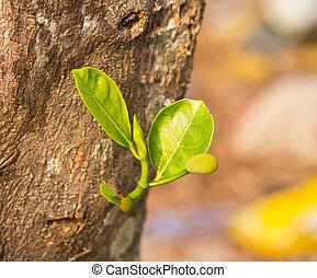 jaca, árvore, jovem