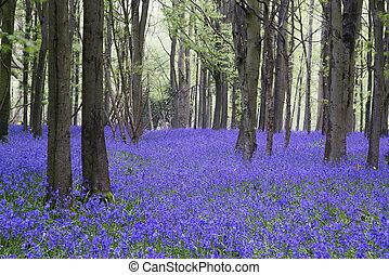 jacinthe des bois, printemps, forêt, vibrant, paysage, moquette