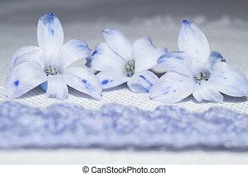 jacinthe, mauve, fleur
