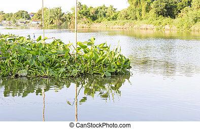 jacinto del agua