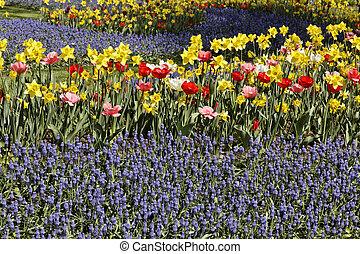 jacintos, con, tulipanes, y, narcisos
