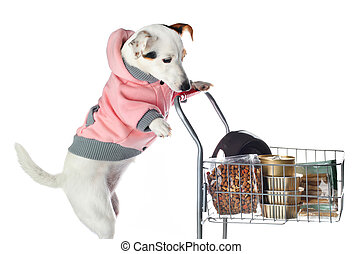 Jack Russell dog pushing a shopping cart full of food on...