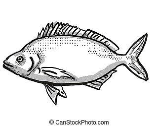 Jackass Morwong Australian Fish Cartoon Retro Drawing -...