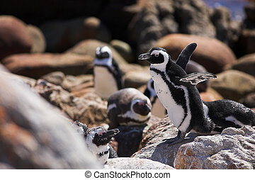 Jackass Penguin #12