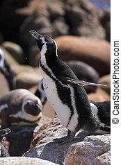 Jackass Penguin #13