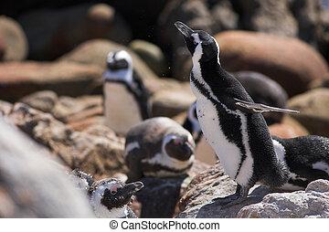 Jackass Penguin #14