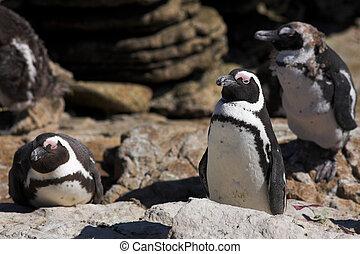 Jackass Penguin #3