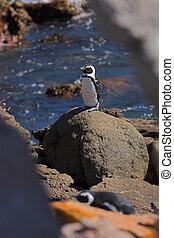 Jackass Penguin #7