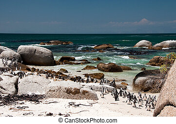 The boulders beach - jackass penguin at The boulders beach