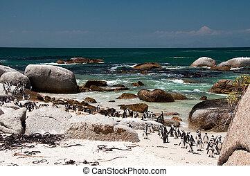 The boulders beach - jackass penguin at The boulders beach