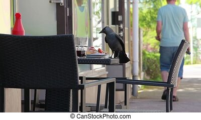 jackdaws lunch at an outdoor cafe close to. Tripod