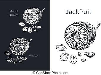 jackfruit, 手, ベクトル, 引かれる, イラスト, icons.