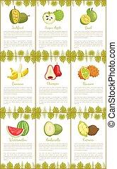 Jackfruit and Sugar Apple Bael Fruits Set Vector - Jackfruit...