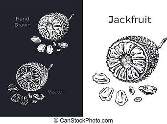 jackfruit, icons., 手, ベクトル, イラスト, 引かれる