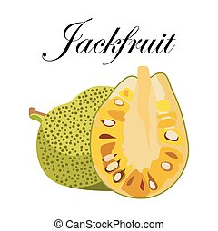 Jackfruit, vector Illustration. Exotic fruit. Hand-drawn style.