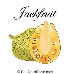 Jackfruit, vector Illustration. Exotic fruit. Hand-drawn style.