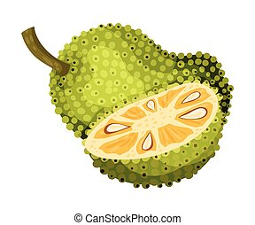 Jackfruit with Green Seed Coat and Cut Piece Showing Fibrous...