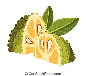 Jackfruit with Green Seed Coat and Fibrous Core Vector ...