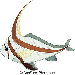 jackknife, fish