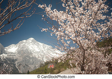 Jade Dragon Snow Mountain. - Jade Dragon Snow Mountain near...