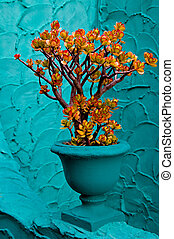 Jade Plant - A jade plant, leaves tipped with red from the ...