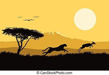 jaguar, hunting., áfrica, ilustración, vector, áfrica., ...