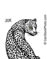 Jaguar isolated illustration on white background