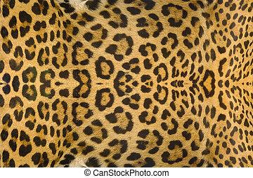 Jaguar, leopard and ocelot skin texture background