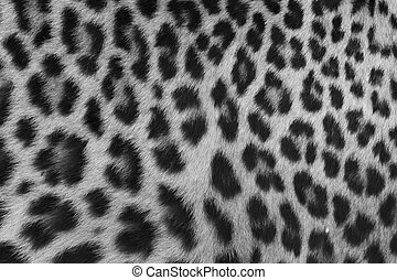 Jaguar, leopard and ocelot skin texture