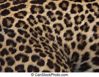 jaguar, leopard, och, ozelot, skinn, struktur