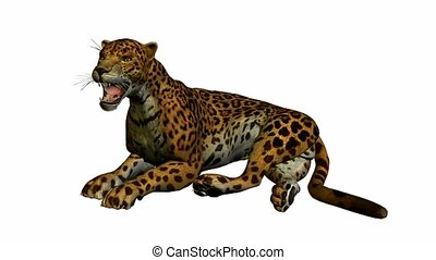 Jaguar lying down on a white background