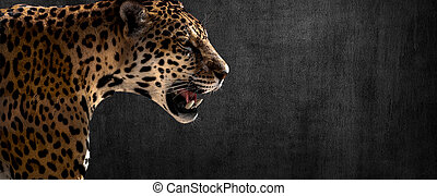 jaguar on horizontal grey wall background