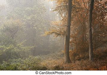 jahreszeiten ändern, von, sommer, in, herbst, herbst, begriff, gezeigt, in, eins, wald, landschaftsbild, bild