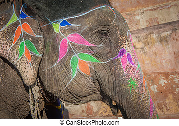 jaipur, india, rajasthan, kleurrijke, elefant