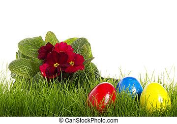 jaja, tło, biały, wielkanoc, czerwony, primula