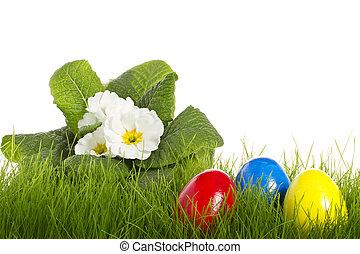 jaja, wielkanoc, białe tło, primula