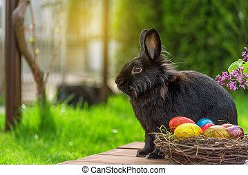 jaja, wielkanocny królik