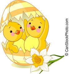 jajko, wykluty, kurczęta, dwa, jeden