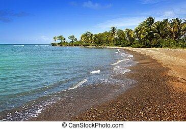 jamaica., sandig, kueste, von, a, bucht, und, palme