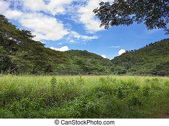 jamaica., tropische , natur, an, a, fuß, von, der, mountain.