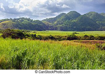 jamaica., tropische , natur, an, a, fuß, von, der, nassau, mountain.